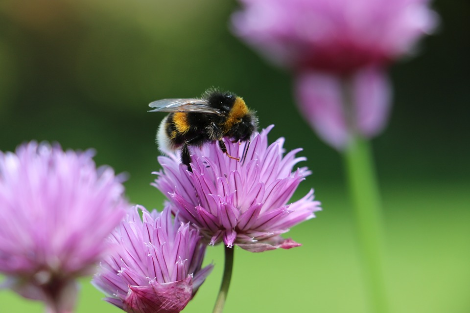 A bee attracted to pollen to illustrate buyers at the awareness stage